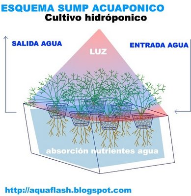 en este esquema ilustrado se describe la disposicin de lo que sera un cultivo acuapnico en un sump jos ant cabello