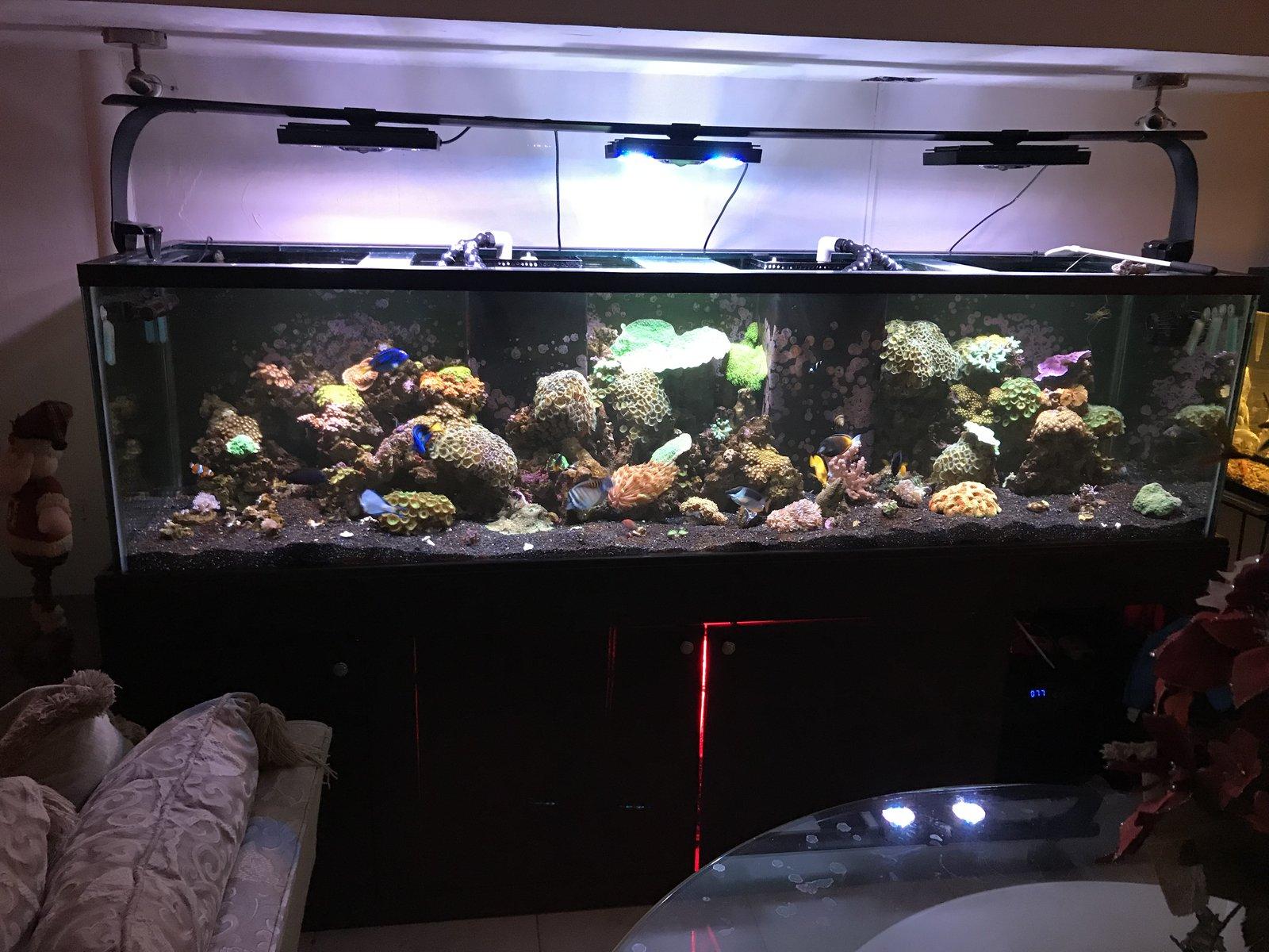 acuario dic2018 foto de frente.