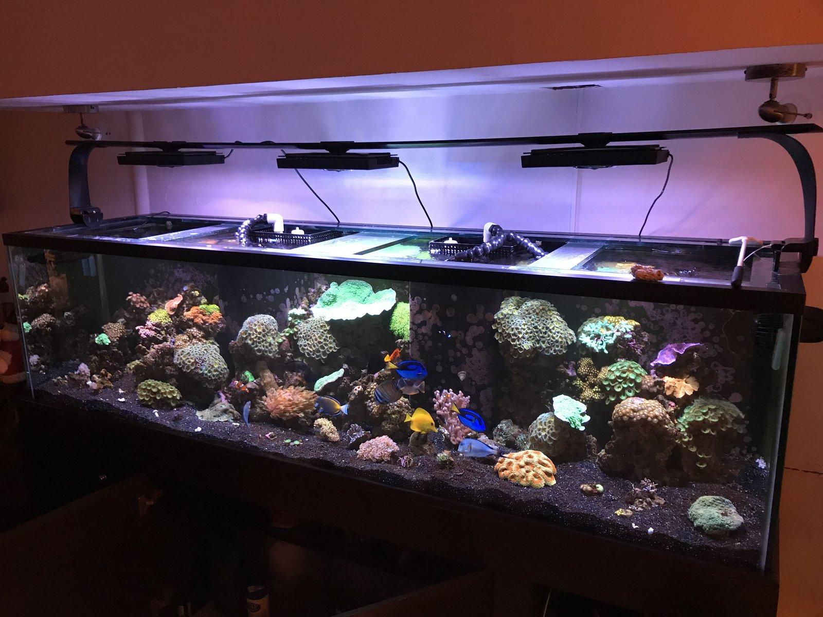 acuario dic2018 foto de frente2.