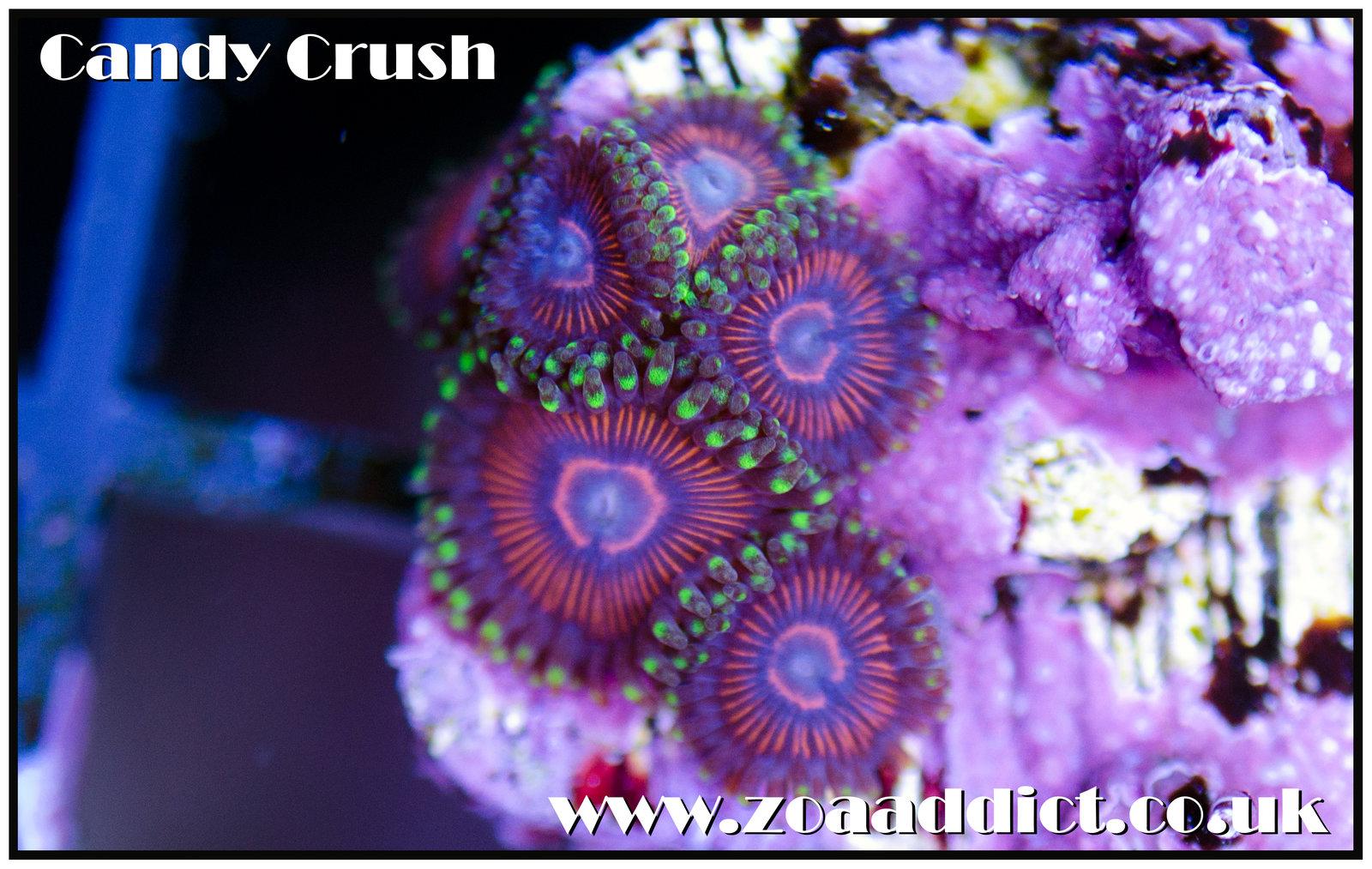 candy crush.