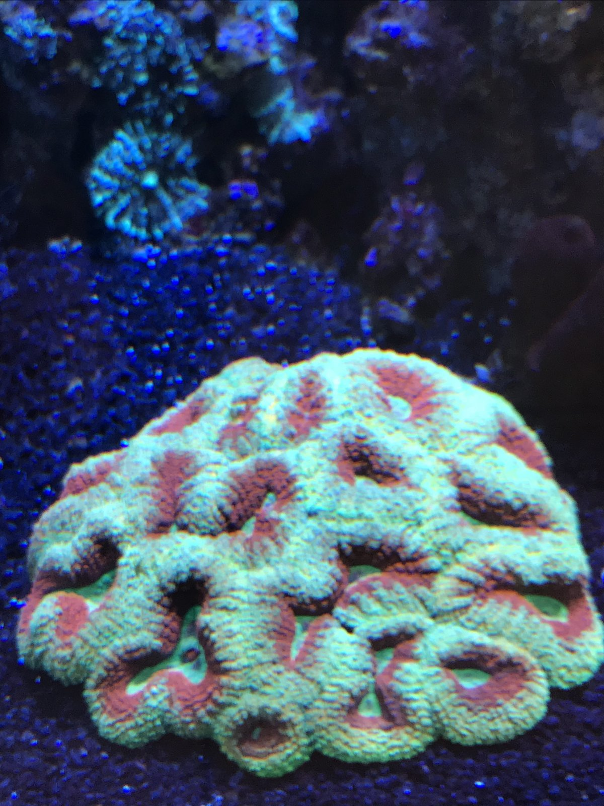 coral1.