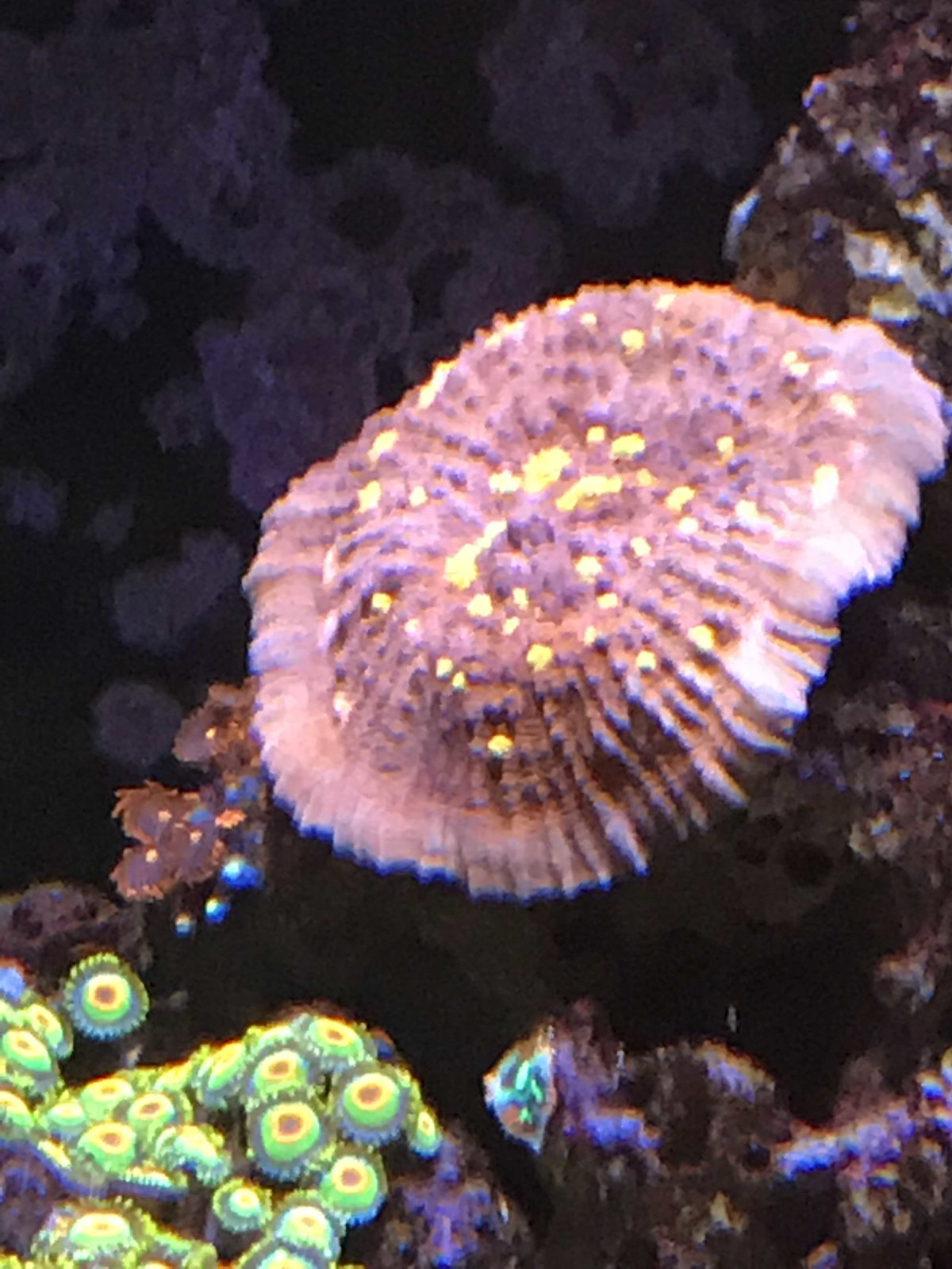 coral10.