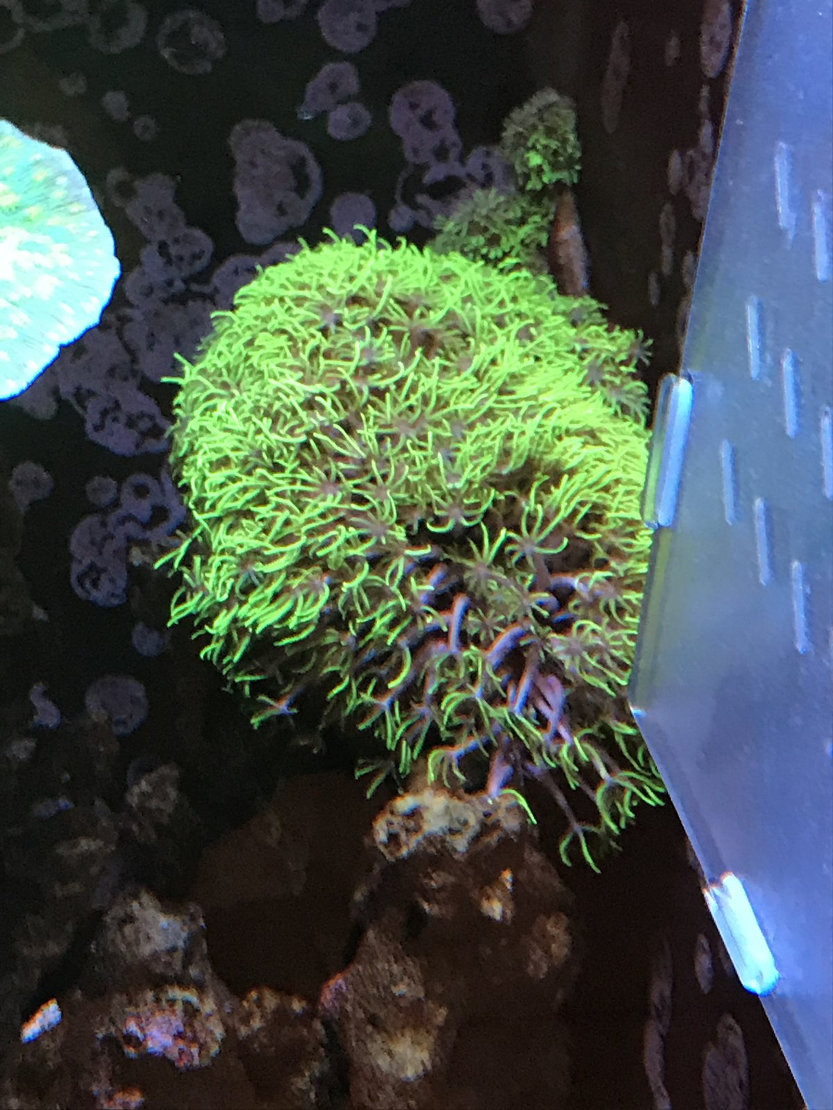 coral6.