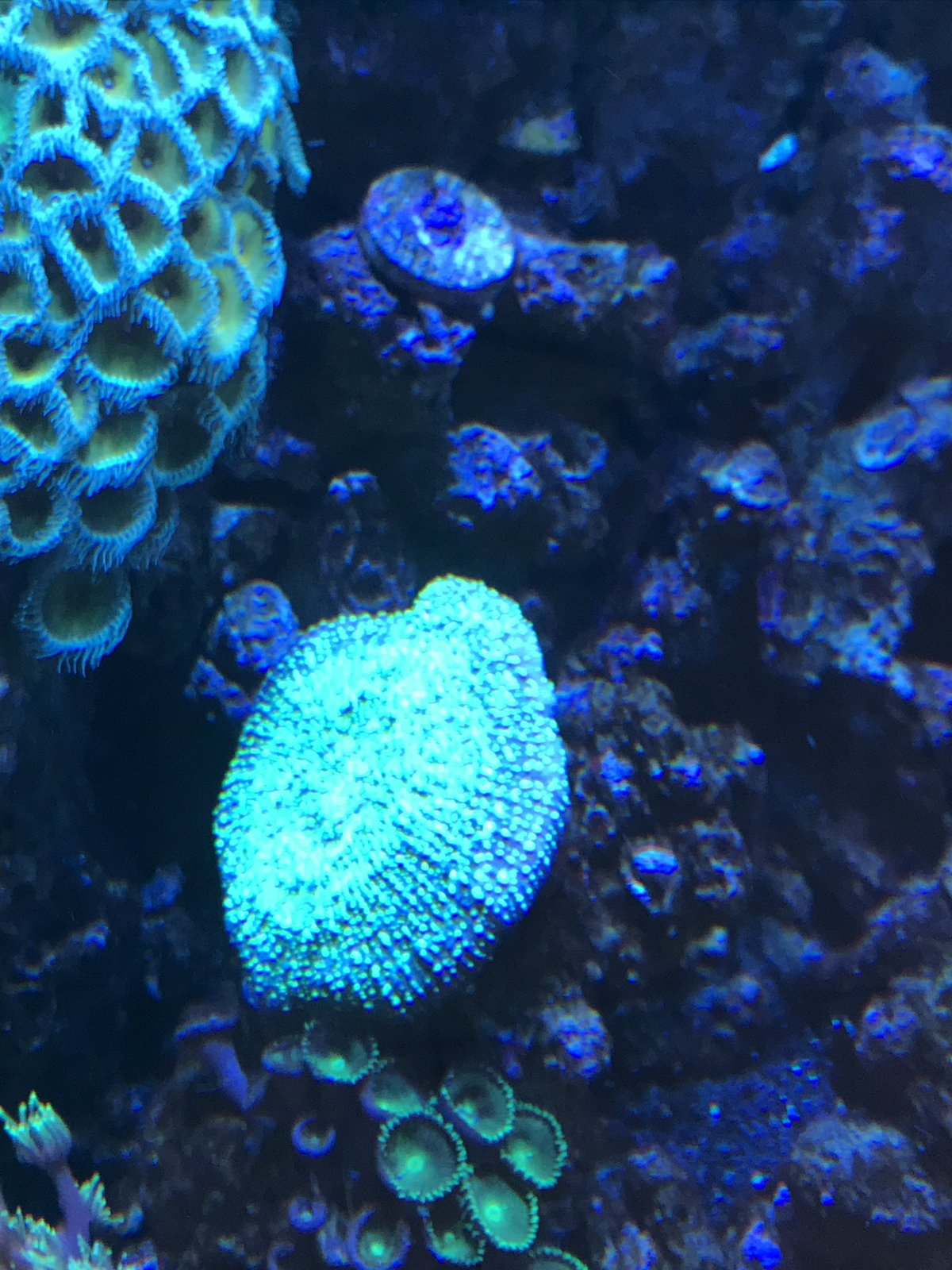 coral9.