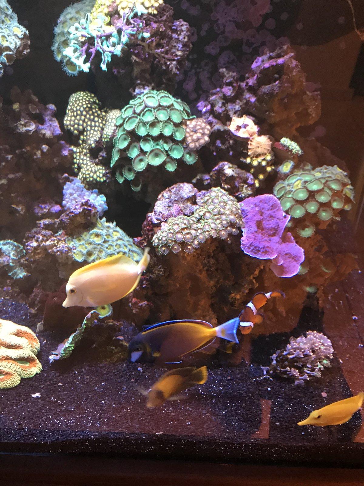 corales y peces dic18.