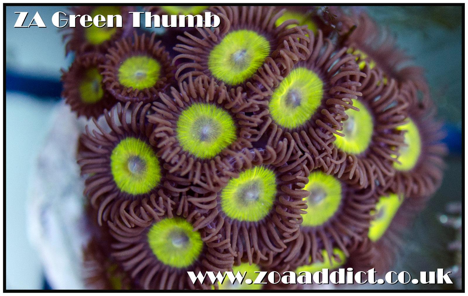 green thumb.