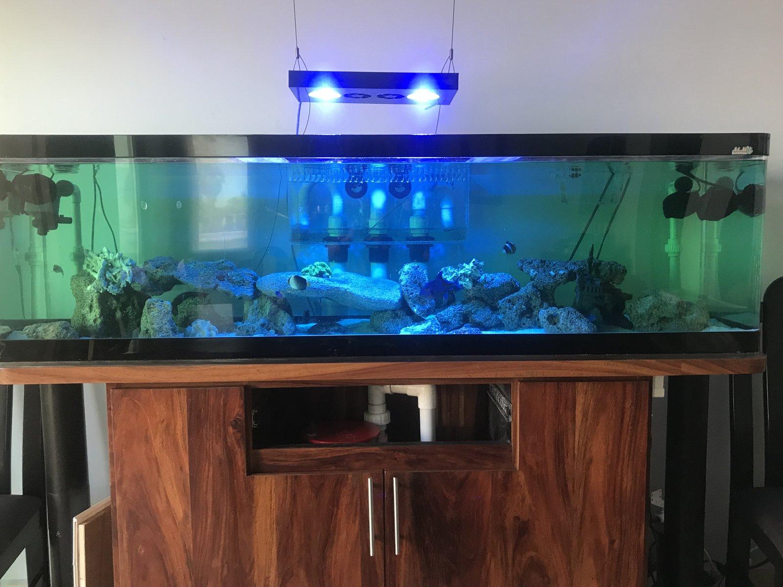 [Venta] - Algunos coralillos   Club Acuarios Marinos