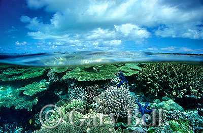 under-over-coral-reef.
