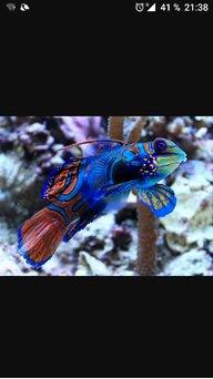 Fanatico corales 507