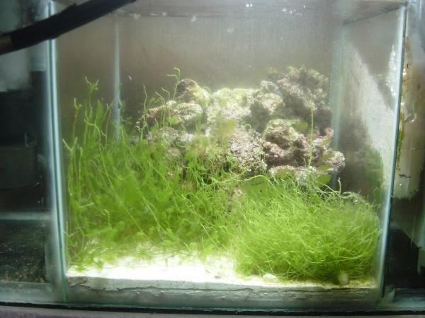 Una vista de mi refugio,piedrasde la regi?n, alga pluma de indio y sustrato aprox. de 3cm aragonita.