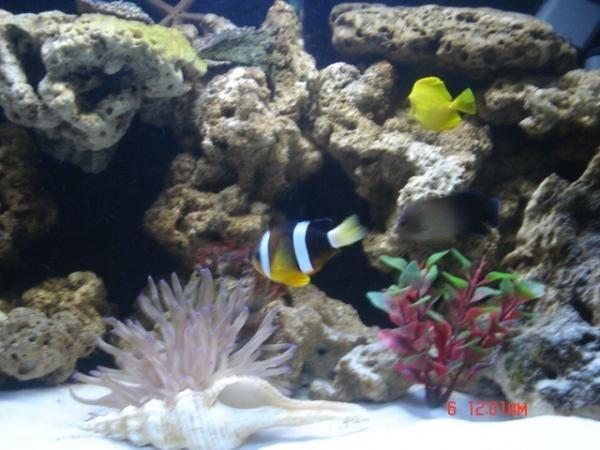 pues aqui cuando iniciaba con mi acuario tenia dos damicelas dos anemonas anonimas,un payaso ocelari