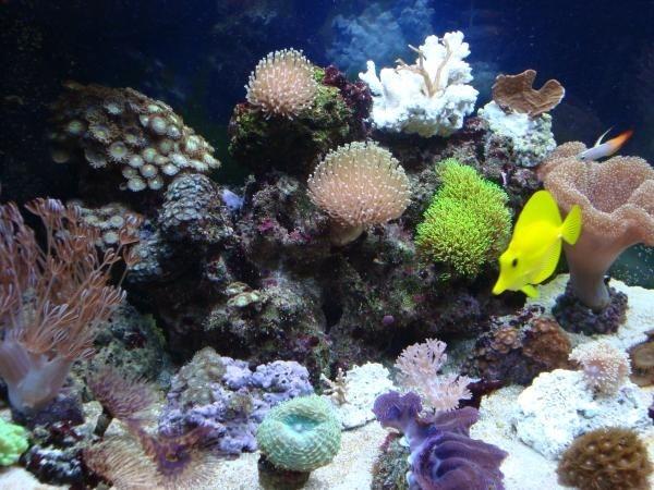 sony acuario 020