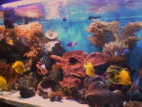 corals 147
