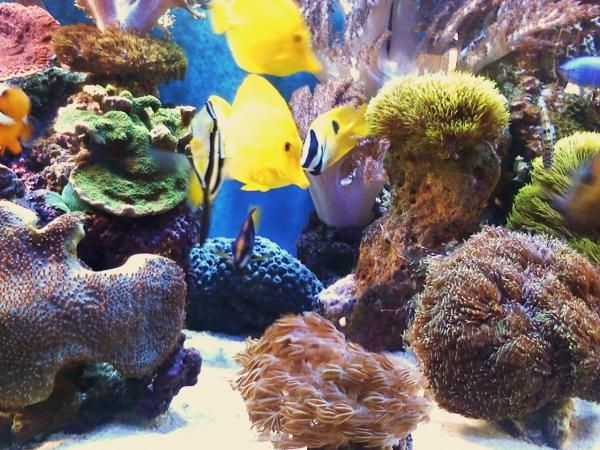 corals 148