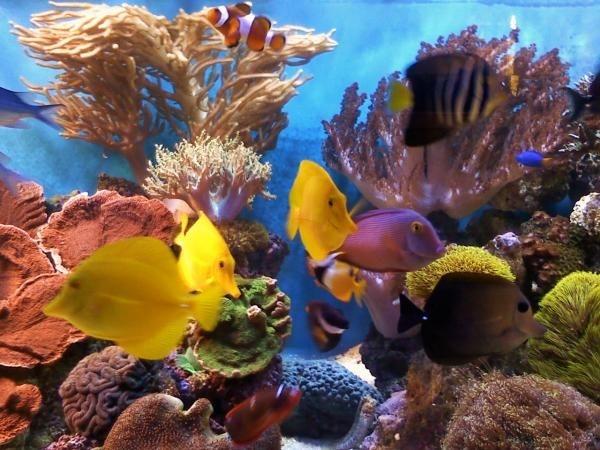 corals 150