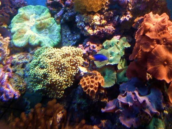 corals 152