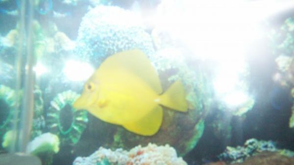 fish1 005