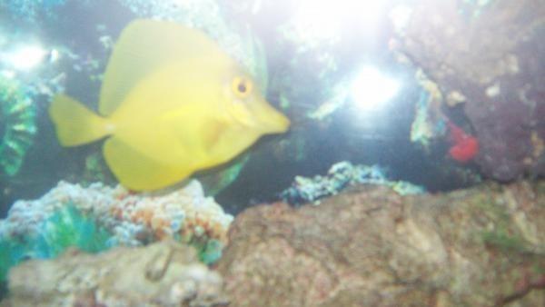 fish1 006