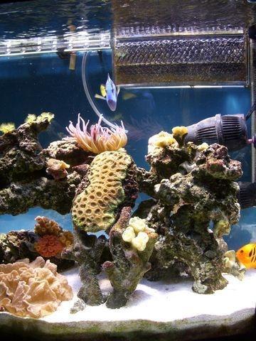 El primer coral, al principio murio de los laterales, y tiene un a?o estable