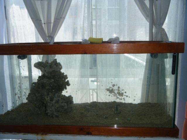 el a comodo es  de dos  islas una  echa  con roca muerta y la otra con roca  viva aprox 30 kg de  ro