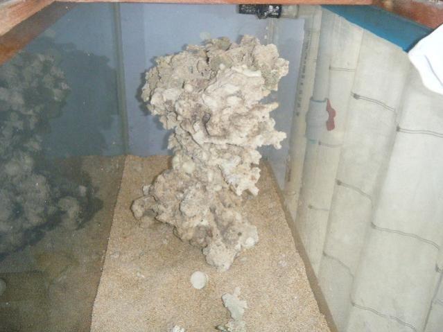la arena es aragonita  de red sea seca combinada con  arena viva de caribe sea pink fiji  comprada e