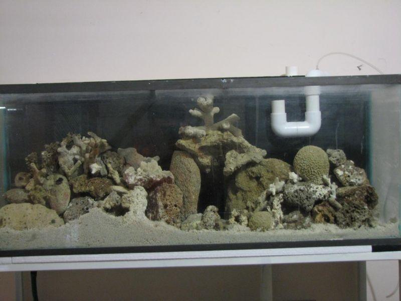 Colocando piedras para un bonito arrecife