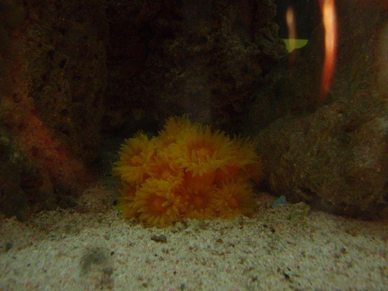 Coral sol 2