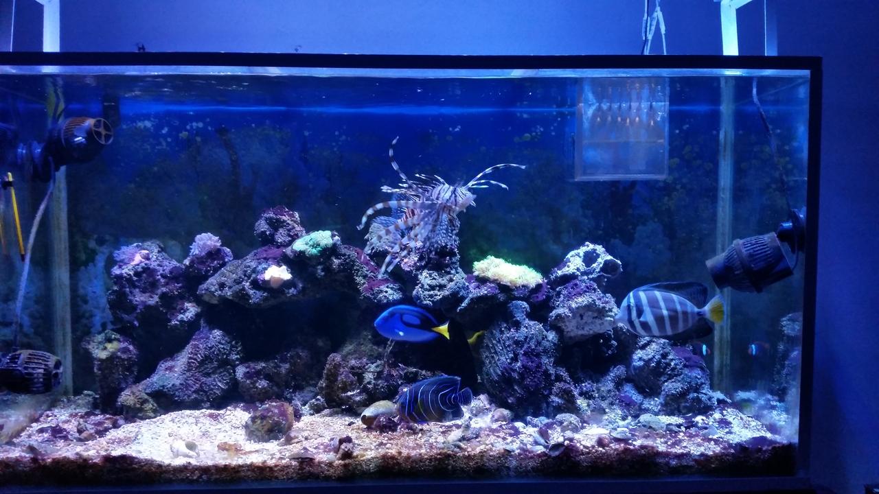 Les presento mis acuarios   Club Acuarios Marinos