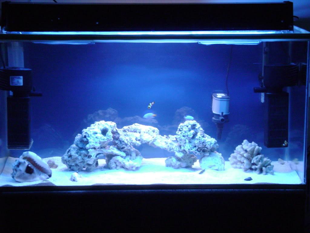 Acuario de solo peces 200 litros club acuarios marinos for Peces de acuario marino