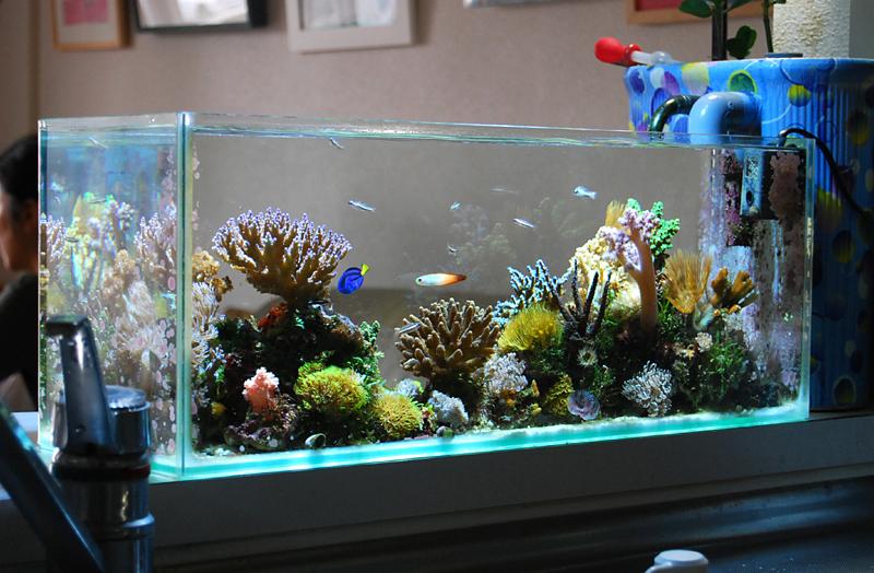 L Glass Fish Tank