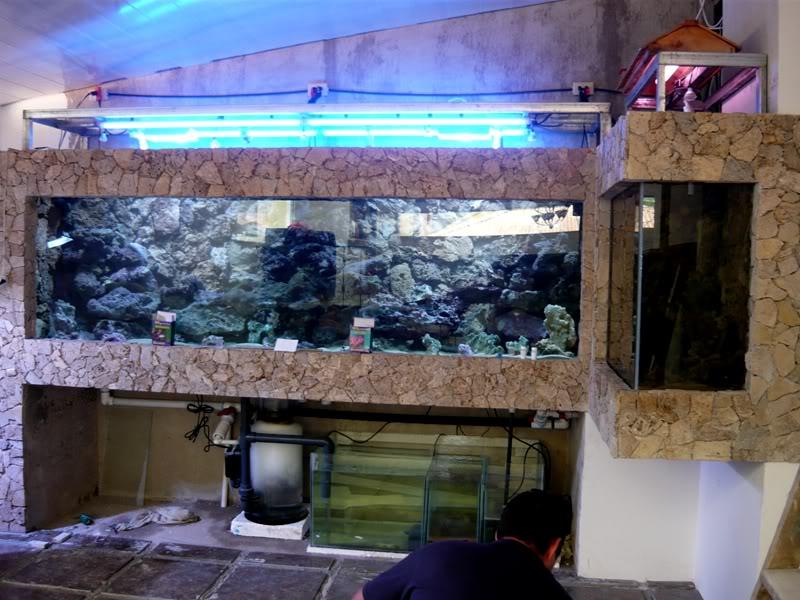 600gls 98gls empotradas club acuarios marinos - Peceras en casa ...