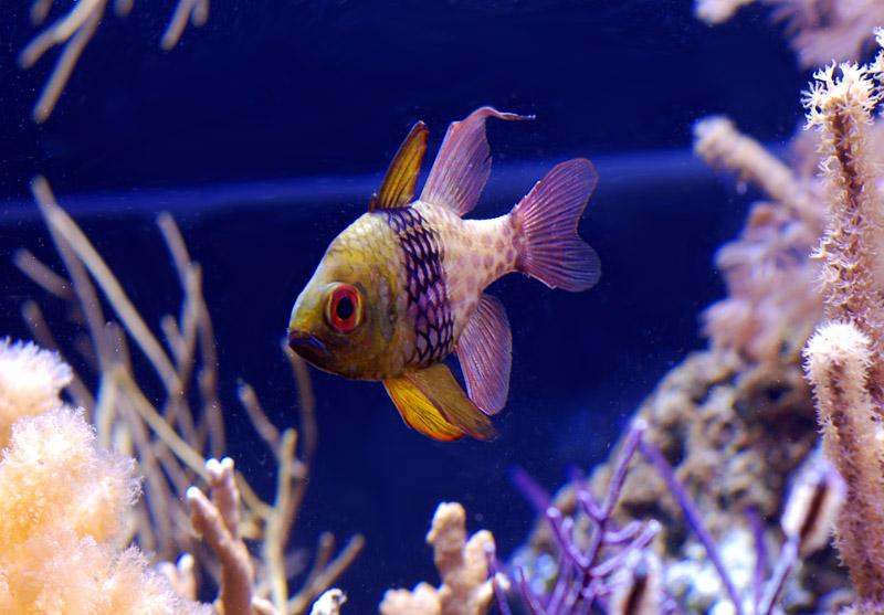 Longevidades de peces en cautiverio club acuarios marinos for Cria de peces en cautiverio