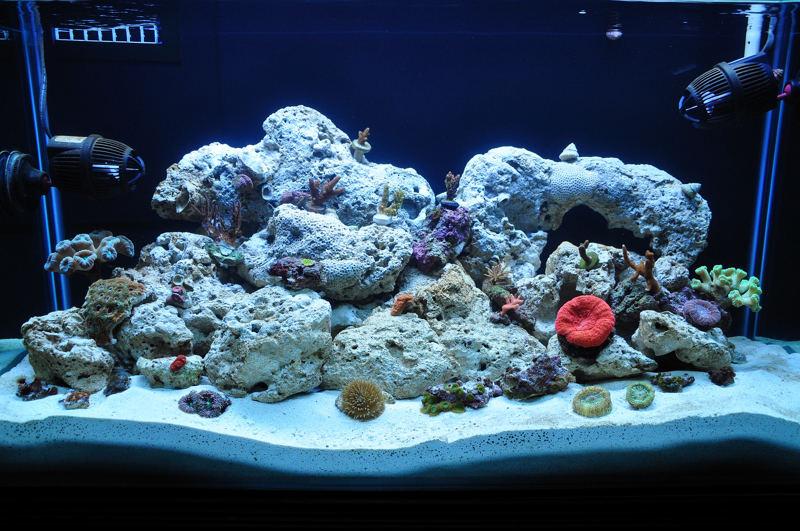 Mi reef de 42 gls club acuarios marinos for Bomba calefaccion roca pc 1025