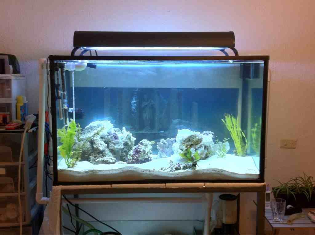 Cambio de casa nueva pecera club acuarios marinos - Peceras para casa ...