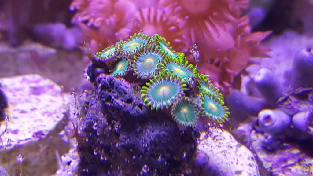 [Venta] - Venta de reef por cambio de residencia   Club