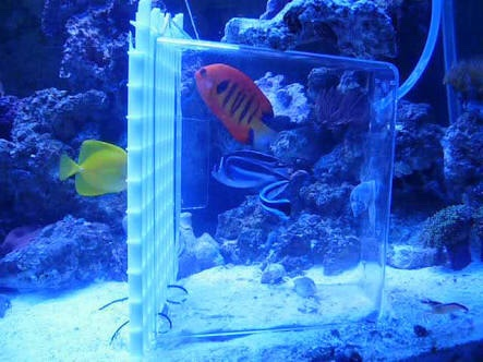 Invertebrados nuevo inquilino for Diy fish trap